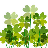 Green transparency clovers Royalty Free Stock Image