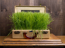 Green Travel or Eco Tourism. A suitcase full of lush green grass for a concept about green travel or eco tourism stock photos