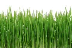 green trawy Fotografia Royalty Free