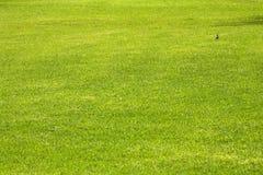 green trawy Fotografia Stock