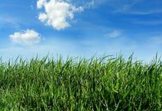 green trawy Zdjęcie Stock