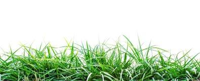 green trawy występować samodzielnie Obraz Royalty Free