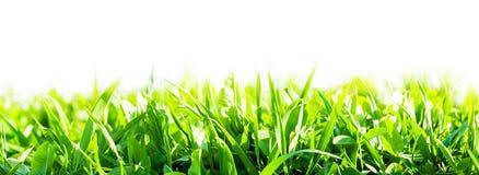 green trawy występować samodzielnie Fotografia Stock