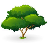 Green Tree Royalty Free Stock Image