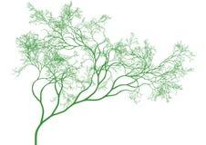 Green tree,  Stock Photography