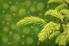 Green tree. On the color backgrounds Royalty Free Stock Photography