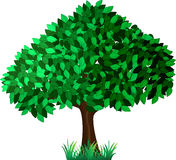 Green tree Royalty Free Stock Photos