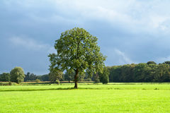 Green tree Stock Image