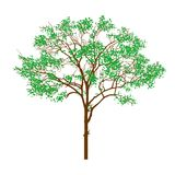 Green tree. In the white background by hand Stock Photography