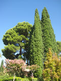 Green tree. In garden Alhambra Granada Spain Royalty Free Stock Images