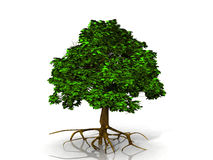 Green tree. A green tree on white background Royalty Free Stock Images