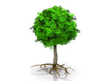 A green tree Royalty Free Stock Photography