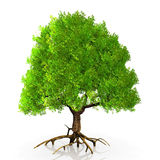 A green tree Stock Images