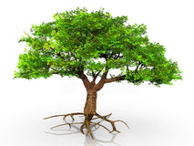 A green tree. Green tree on a white background Stock Photography