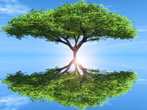 The green tree. And reflection Stock Photography