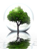 Green tree. In a bubble and water Stock Images