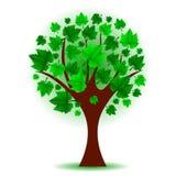 green tree Royalty Free Stock Photos
