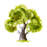 Green tree Stock Image