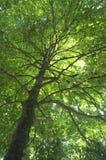 Green Tree Stock Photo