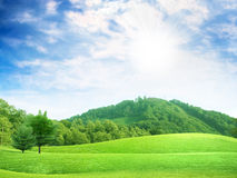 Green tree. Abstract scene green tree on meadow under blue sparkling sky Royalty Free Stock Images