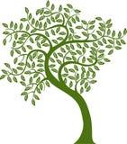 Green Tree. Representing saving planet Stock Image
