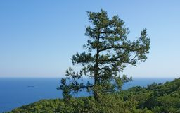 Green tree against blue sea and sky Royalty Free Stock Photography