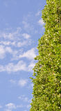 Green tree against blue sky Stock Images