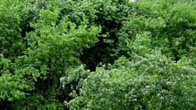 Green tree against the wind. France stock video footage