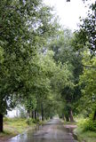 Green tree alley. After rain in summer with some water on road royalty free stock photo