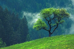 Green tree. Alone on beautiful hill with grass and flowers Royalty Free Stock Image