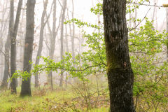 Green tree alone in the fog with grass and flowers. Foggy forest landscape. Royalty Free Stock Photography