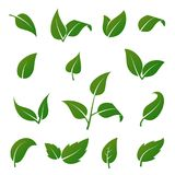 Green Tree And Plant Leaves Vector Icons Isolated On White Background. Eco Symbols Set Royalty Free Stock Images