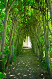 Green Tree Archway Royalty Free Stock Images