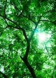 Green tree background stock image