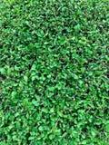 Green tree background royalty free stock photo