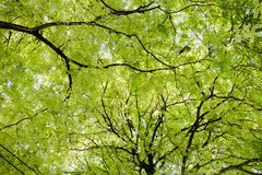 Green tree background, texture Stock Photos