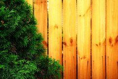 Green tree on the background of the wooden planks Royalty Free Stock Photo