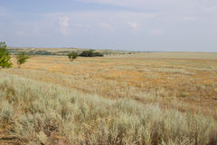 Green tree on a background of yellow steppe. Royalty Free Stock Photo