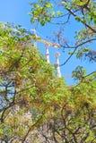 Green tree  in Barcelona in spring Stock Image
