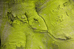 Green tree bark Stock Photos