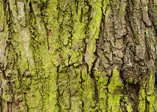 Green tree bark Stock Photography