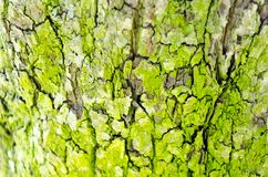 Tree bark background background texture stock photos