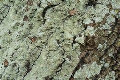 Green tree bark Stock Images