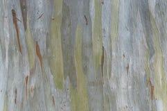 Green tree bark texture Stock Photo