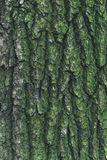 Green tree bark. royalty free stock images