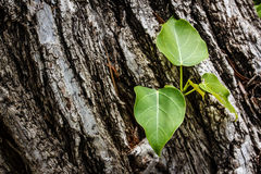 Green tree on bark wood background Stock Image