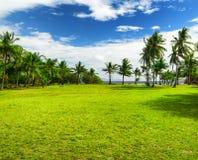 Green tree on the beach. Malcapuya island, Philippines Royalty Free Stock Photo