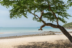 Green tree on the beach in Thailand Royalty Free Stock Photos