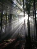 Green Tree Behind Sun Light Royalty Free Stock Photos