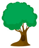 Green tree with big trunk. Illustration Stock Photo